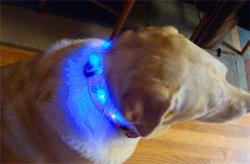 Светодиодный собачий ошейник
